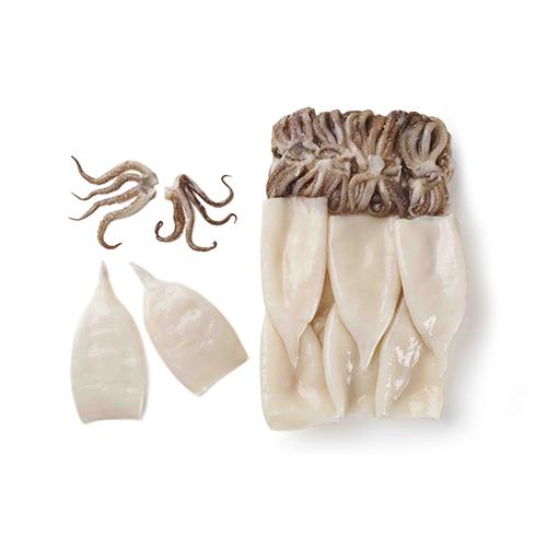 Todarodes Calamari