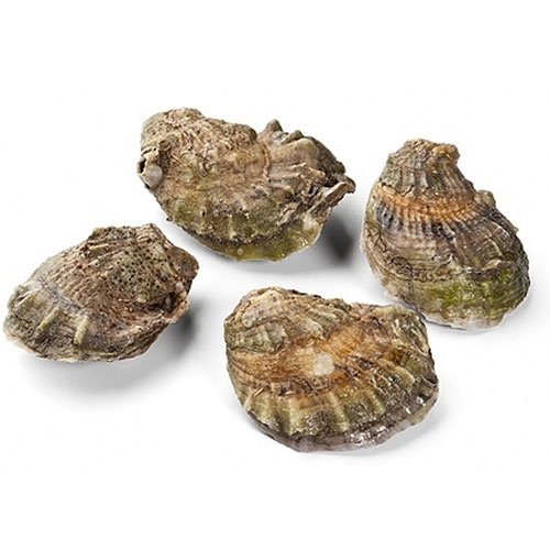 OYSTER-WHOLESHELL