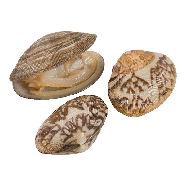 baby clam product