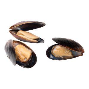 Chilean Mussels